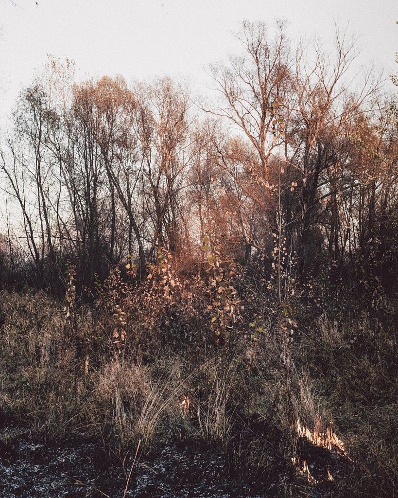 Kowitsch-robinhinsch-13.jpg